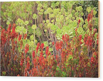 Wood Print featuring the photograph Christmas Cactii by David Chandler