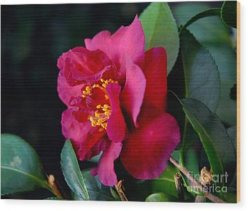 Wood Print featuring the photograph Christmas Camellia by Marie Hicks