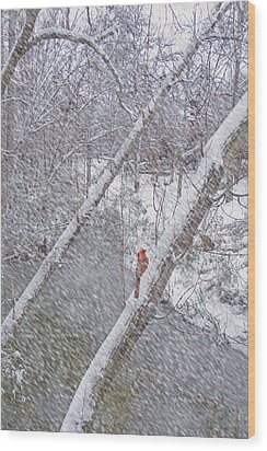 Christmas Card - Cardinal In Tree Wood Print by Larry Bishop