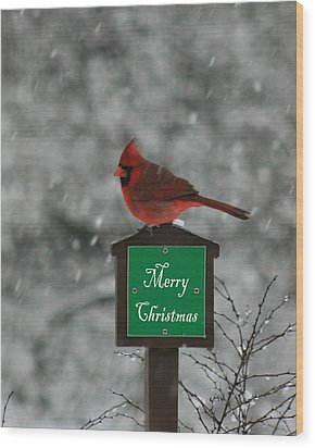 Christmas Cardinal Male Wood Print