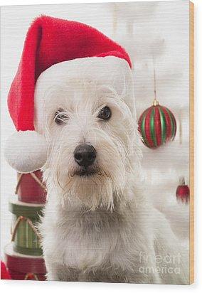 Christmas Elf Dog Wood Print by Edward Fielding