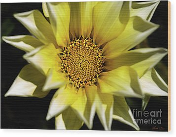 Wood Print featuring the photograph Chrysanthos by Linda Lees