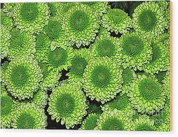 Chrysanthemum Green Button Pompon Kermit Wood Print by Kaye Menner