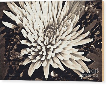 Wood Print featuring the photograph Chrysanthemum In Sepia 2  by Sarah Loft