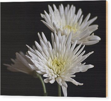 Chrysanthemums Wood Print by Svetlana Sewell