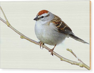 Chubby Sparrow Wood Print