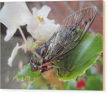 Wood Print featuring the photograph Cicada On Flower by Beth Akerman