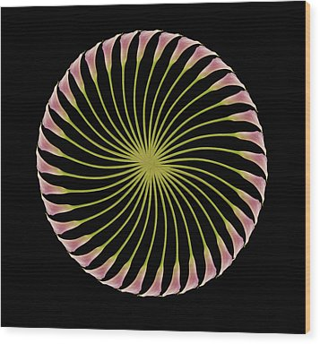 Circle Of Lily Wood Print by Jon Daly