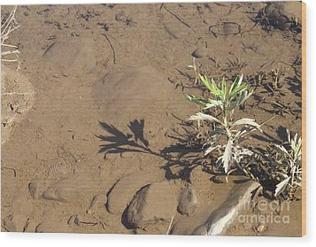 Wood Print featuring the photograph Circle Shadow Plant by Marie Neder