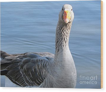 Wood Print featuring the photograph City Park Goose by Elizabeth Fontaine-Barr