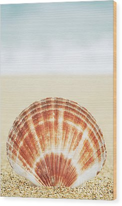 Clam Shell Wood Print by Brandon Tabiolo - Printscapes