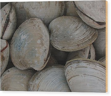 Clam Shells Wood Print by Juergen Roth