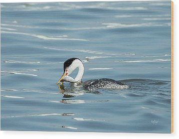 Wood Print featuring the photograph Clarks Grebe by Everet Regal