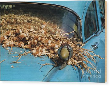 Classic American Car With Trailer Full Of Garlic Wood Print by Sami Sarkis