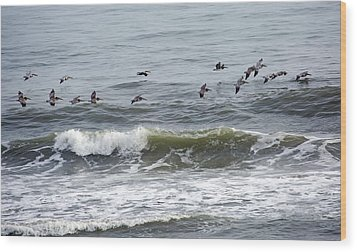 Classic Brown Pelicans Wood Print by Betsy Knapp