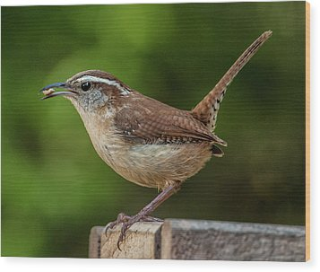 Classic Carolina Wren Wood Print