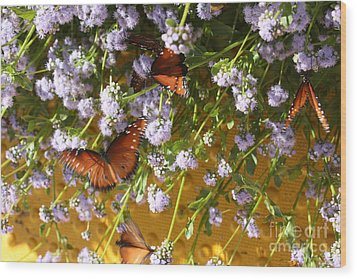 Cleared For Takeoff Wood Print