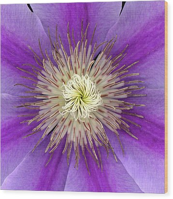 Clematis Wood Print by Christopher Gruver