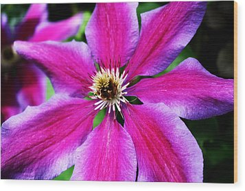 Clematis Flower Wood Print by Cathie Tyler