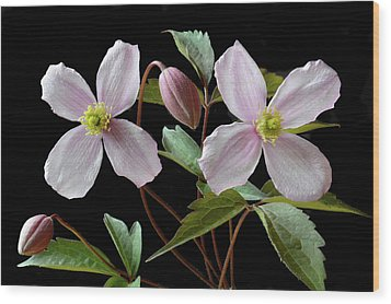 Wood Print featuring the photograph Clematis Montana Rubens by Terence Davis