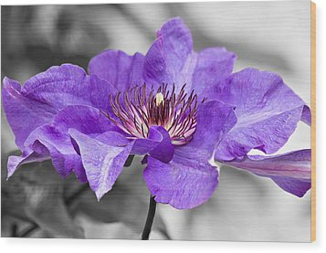 Clematis Wood Print by Scott Carruthers