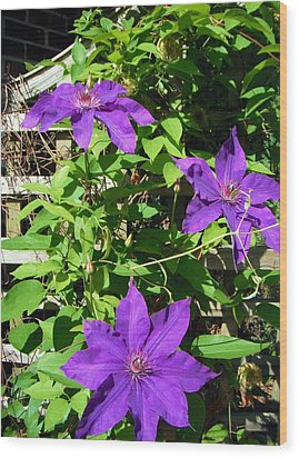 Wood Print featuring the photograph Climbing Clematis by Susan Carella