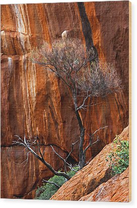 Clinging To Life Wood Print by Mike  Dawson