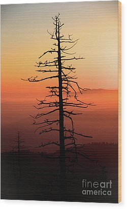 Wood Print featuring the photograph Clingman's Dome Sunrise by Douglas Stucky
