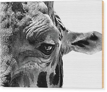 Close Encounter Wood Print by Marion Cullen