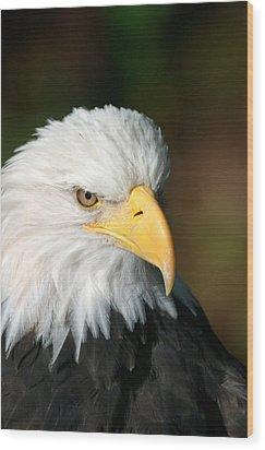 Close Portrait Of A Bald Eagle Wood Print by Ralph Lee Hopkins