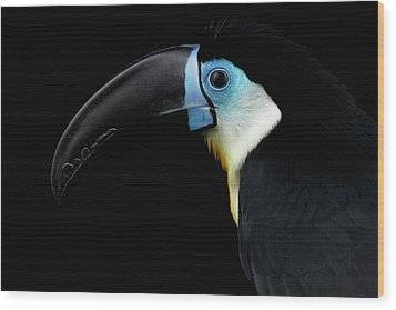 Close-up Channel-billed Toucan, Ramphastos Vitellinus, Isolated On Black Wood Print by Sergey Taran