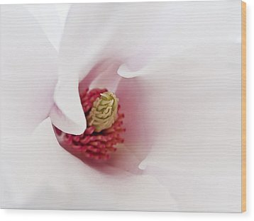 Abstract White Red Pink Flowers Macro Photography Art  Wood Print by Artecco Fine Art Photography