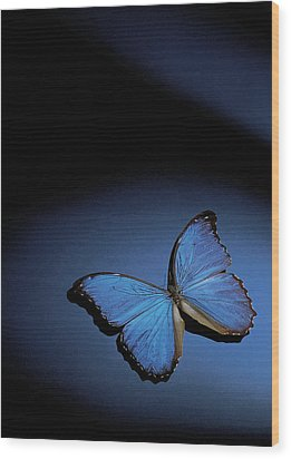 Close-up Of A Blue Butterfly Wood Print by Stockbyte