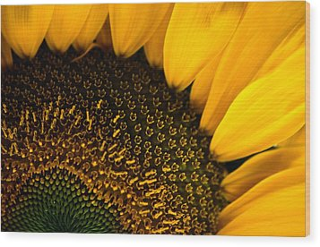 Close-up Of A Sunflower Wood Print by Todd Gipstein