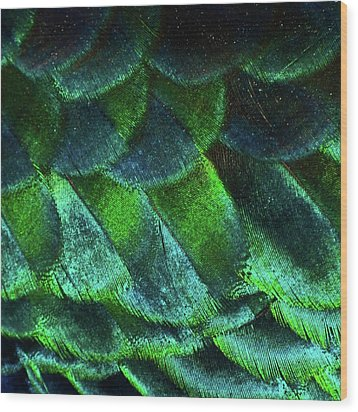 Close Up Of Peacock Feathers Wood Print by MadmàT