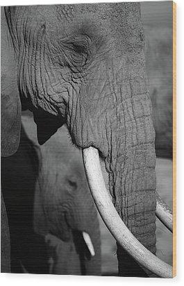 Close Up Of Two Elephants Wood Print by Achim Mittler, Frankfurt am Main