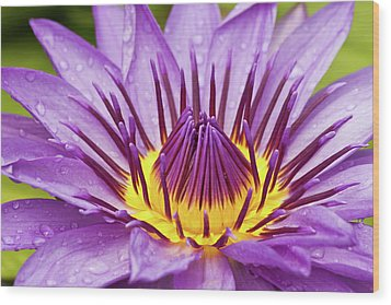 Close Up Of Violet Water Lily Wood Print by Tosporn Preede
