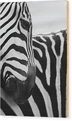 Close-up Of Zebra Face And Shoulder Wood Print by George Jones