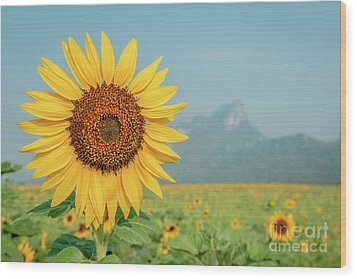 Close-up On Sunflower. Wood Print by Tosporn Preede