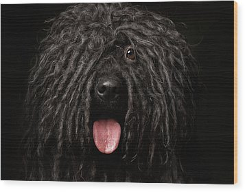 Close Up Portrait Of Puli Dog Isolated On Black Wood Print by Sergey Taran