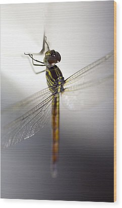 Close Up Shoot Of A Anisoptera Dragonfly Wood Print by Ulrich Schade
