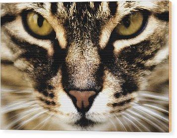 Close Up Shot Of A Cat Wood Print