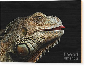 Close-upgreen Iguana Isolated On Black Background Wood Print