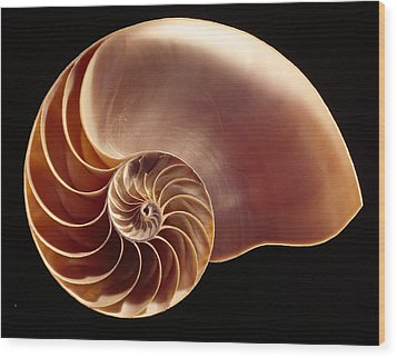 Close View Of Chambered Nautilus Wood Print by Victor R. Boswell, Jr