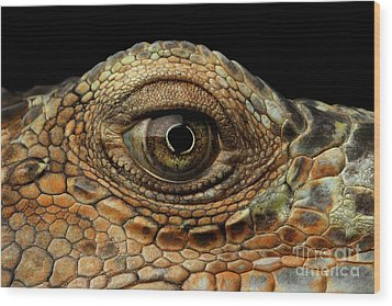 Closeup Eye Of Green Iguana, Looks Like A Dragon Wood Print
