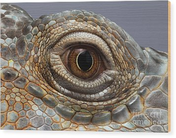 Closeup Eye Of Green Iguana Wood Print