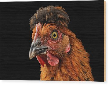 Closeup Ginger Chicken Isolated On Black Background In Profile View Wood Print by Sergey Taran