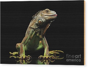 Closeup Green Iguana Isolated On Black Background Wood Print