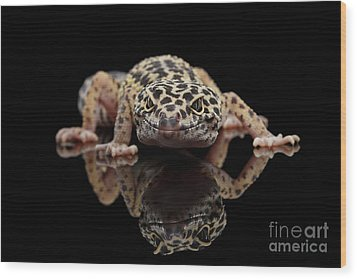 Closeup Leopard Gecko Eublepharis Macularius Isolated On Black Background, Front View Wood Print