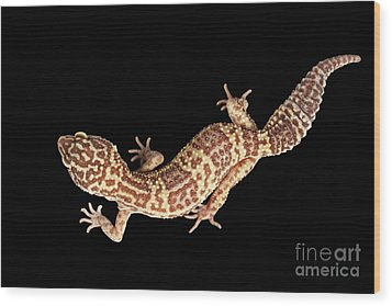 Closeup Leopard Gecko Eublepharis Macularius Isolated On Black Background Wood Print